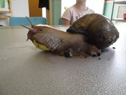 our-nurseries-snail